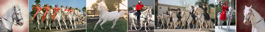 Camarillo White Horse Association
